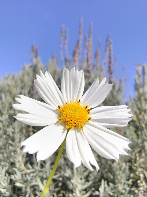 Flower, Spring Flowers, Nature, Sky, Garden, Beautiful