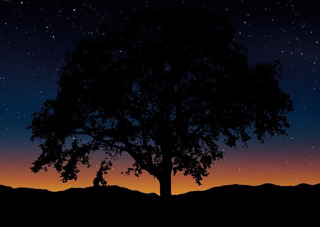 Tree, Silhouette, Landscape, Nature, Sky