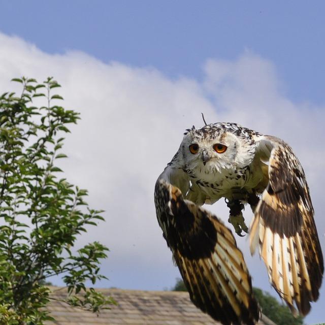 Owl, Bengal, Flight, England, Sky, Predator