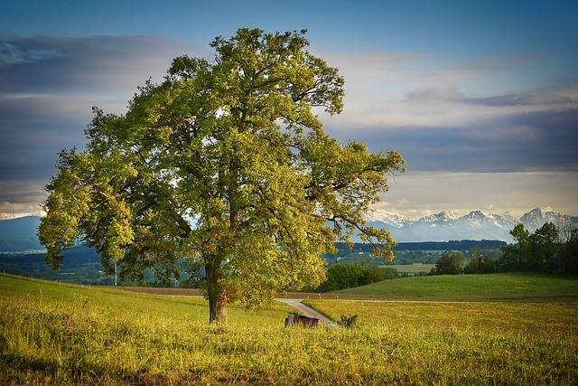 Nature, Landscape, Tree, Sky, Panorama, Idyllic