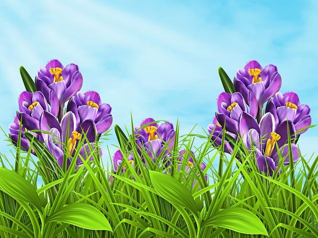 Nature, Plant, Flowers, Sky, Spring, Plant Wildlife