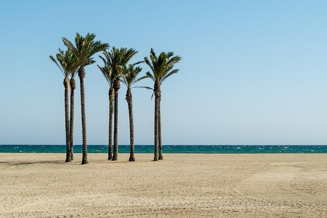 Beach, Palm Trees, Summer, Sea, Travel, Nature, Sky
