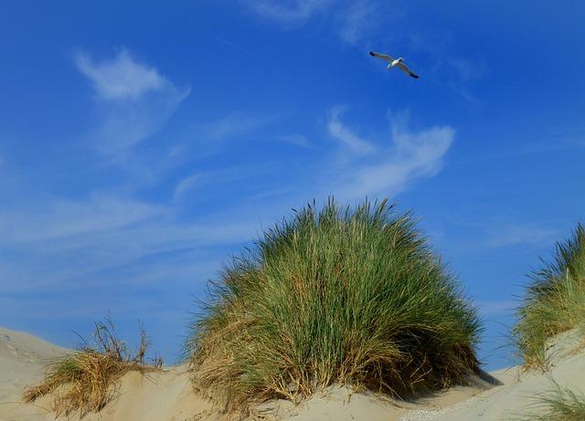 Dunes, Dune Grass, Sky, Clouds, Seagull