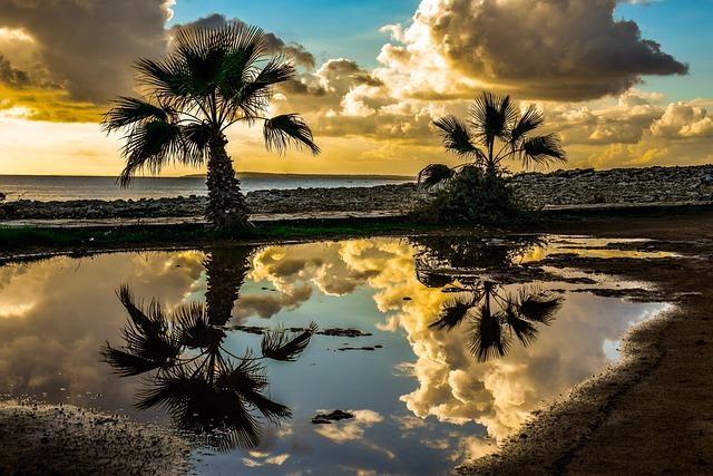 Palm Trees, Sky, Clouds, Horizon, Seashore, Sunset