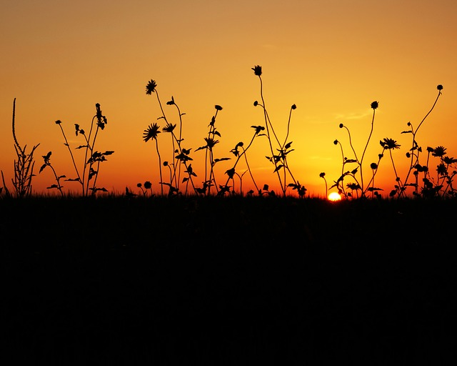 Sunset, Sun, Set, Sunrise, Sky, Nature, Summer, Light