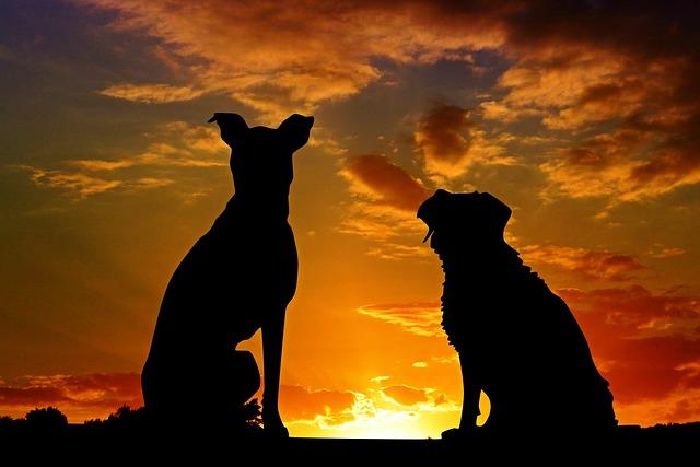 Dogs, Animals, Sunset, Silhouette, Back Light, Sky