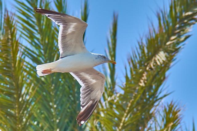 Seagull, Palm, Beach, Sea, Holiday, Sky, Summer