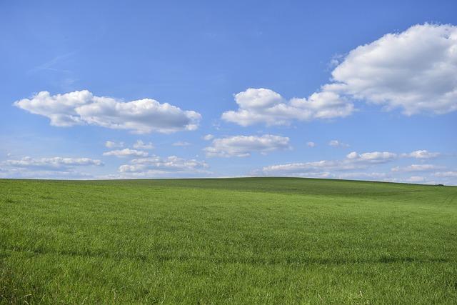 Field, Grass, Nature, Landscape, Sky, Clouds, Summer
