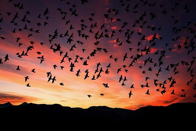 Sunset, Dusk, Silhouette, Sky, Birds