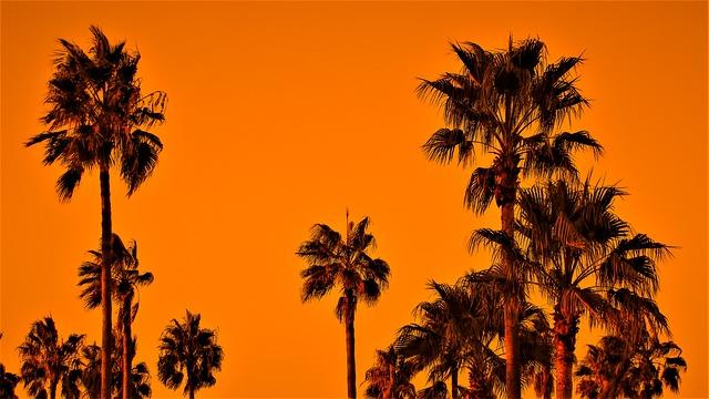 Palm Trees, Sunset, Sky, Exotic, Nature, Orange