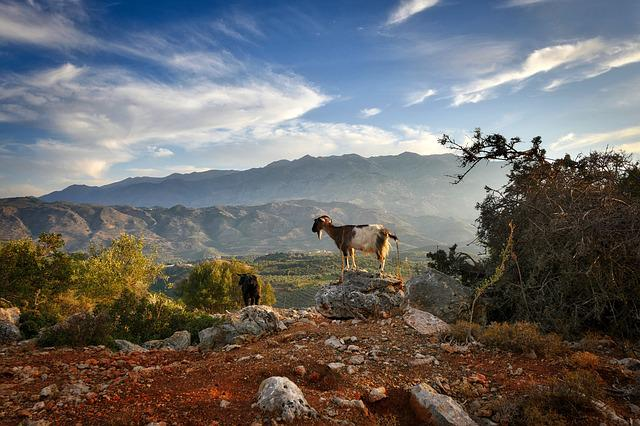 Crete, Abendstimmung, Goat, Sunset, Sky, Mood, Holiday