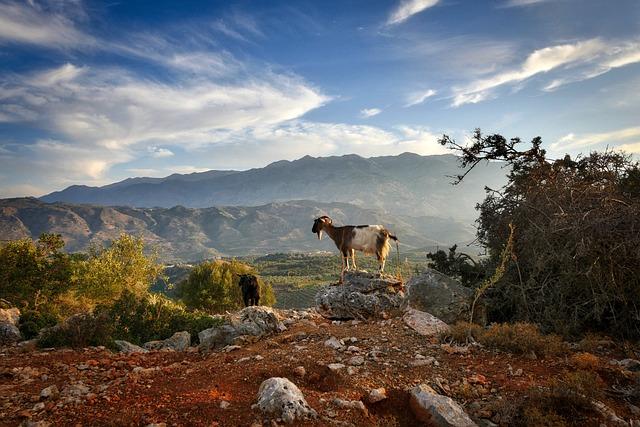 Crete, Abendstimmung, Goat, Sunset, Sky, Mood, Holiday