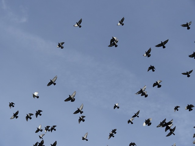 Birds, Pigeons, Sky, Bird, Dove, Take Off