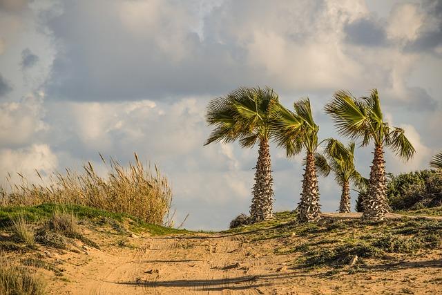 Dirt Road, Palm Trees, Landscape, Nature, Travel, Sky