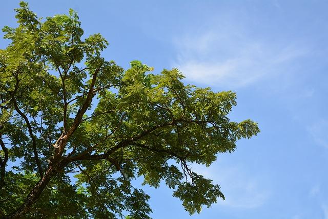 Sky Tree, Natural, Tree, Autumn Leaves, Sky