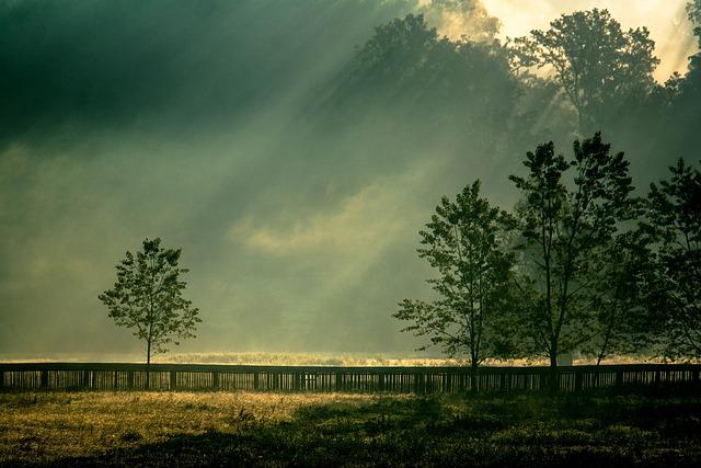 Nature, Tree, Landscape, Dawn, Sky