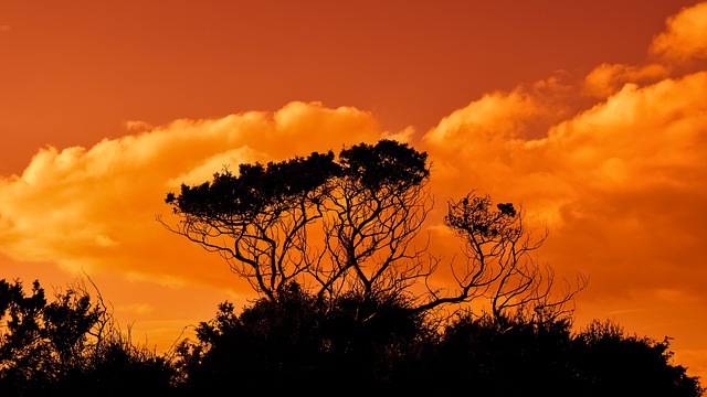 Trees, Branches, Sunset, Sky, Clouds, Nature