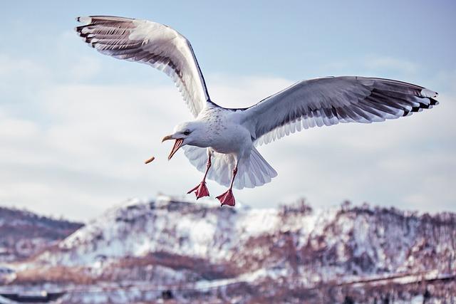 Nature, Bird, Waters, Sea, Wildlife, Outdoor, Sky, Free