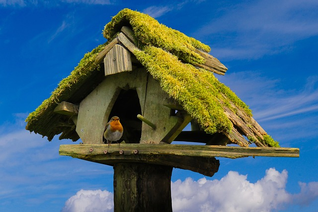 Nature, Sky, Aviary, Animals, Bird, Robin, Moss, Wood