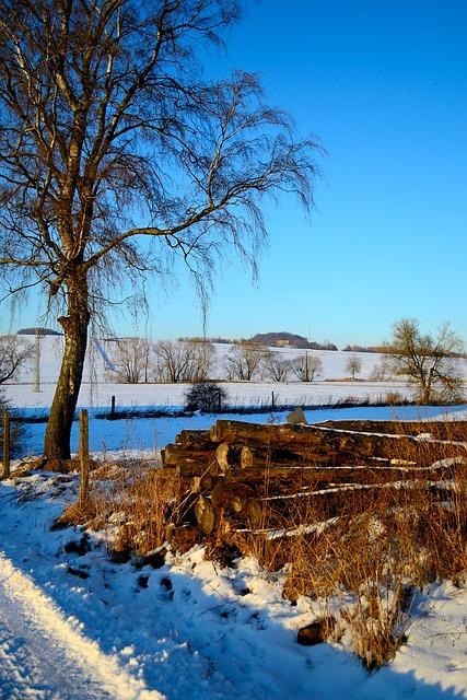 Tree, Nature, Landscape, Wood, Season, Winter, Sky