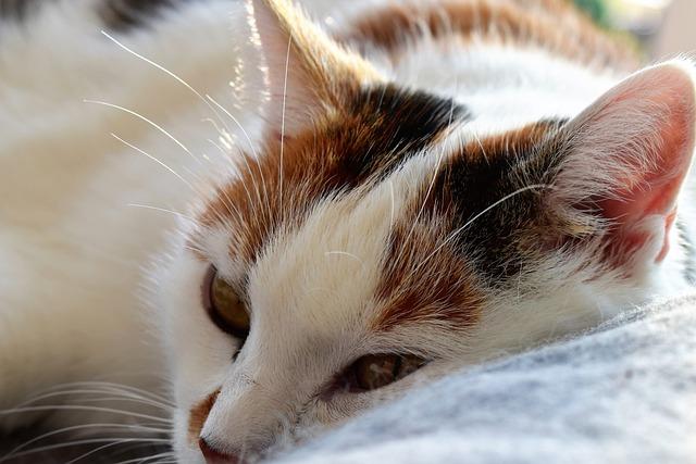 Cat, Animal, Lazing Around, Pet, Cat's Eyes, Sleep