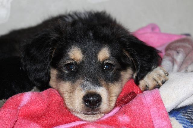 Puppy, Dog, Petit, Pet, Sad, Sleep