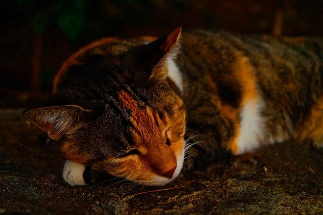 Cat, Spring, Sleep