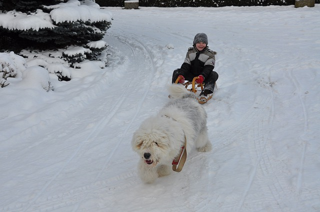 Bobtail, Dog, Winter, Child, Fun, Slide, Sleigh Ride