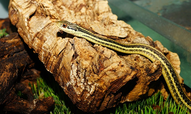 Snake, Young Animal, Cute, Slim, Reptile, Animal