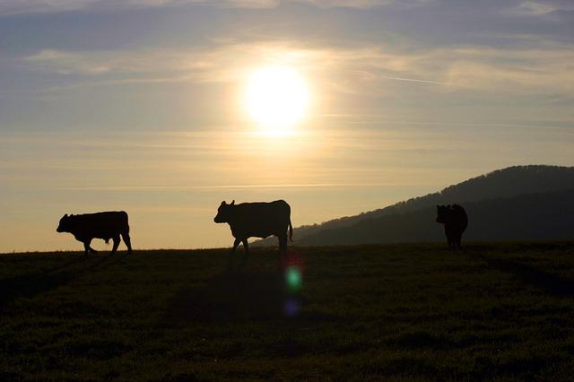 Sunset, The Cows, Pasture, Contrast, Slovakia, Village