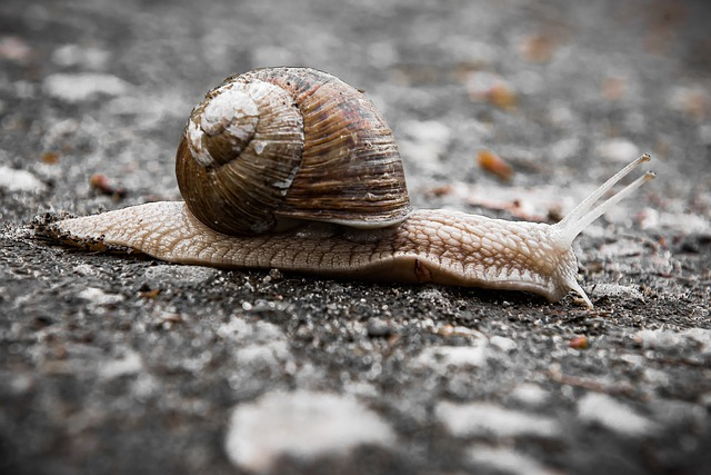 Snail, Slowly, Bauchfuesser, Slimy