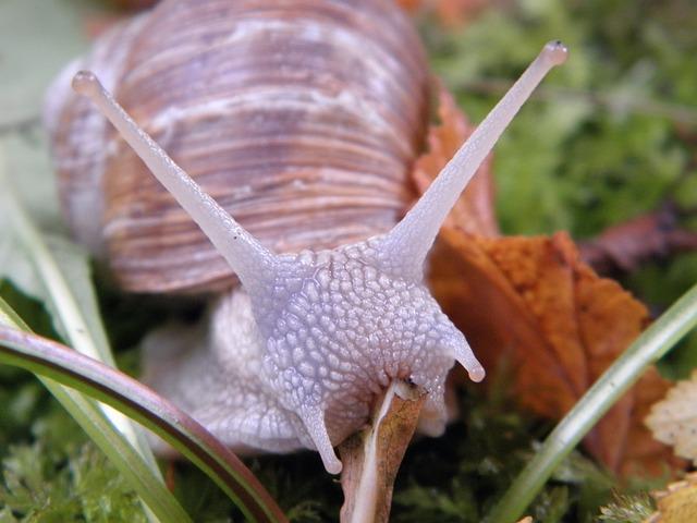 Snail, Shell, Escargots, Mollusk, Slowly
