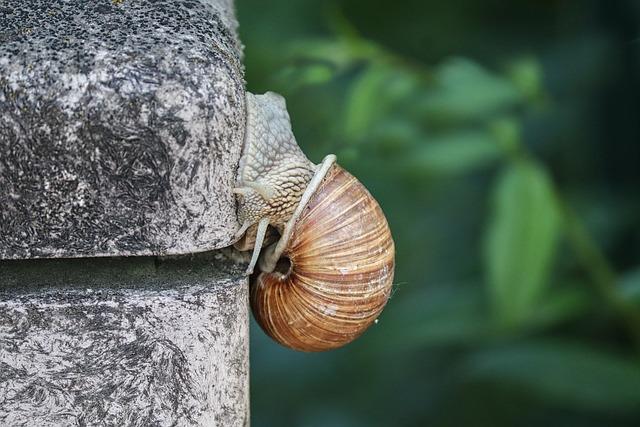 Snail, Shell, Crawl, Wall, Mollusk, Slowly, Nature