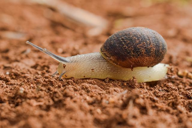 Slow, Snail, Slimy, Gastropod, Slug, Nature, Wildlife