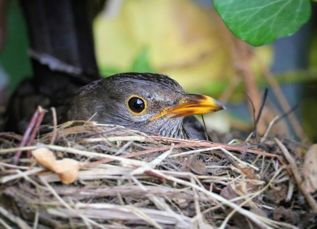 Bird, Nature, Animal World, Feather, Small, Animal