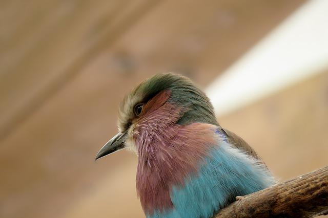 Bird, Animal World, Zoo, Animal, Small, Feather