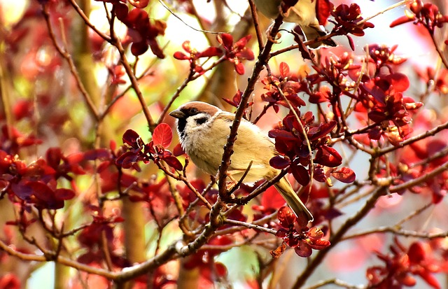 Sparrow, Bird, Small Bird, Plumage, Animal, Sparrows