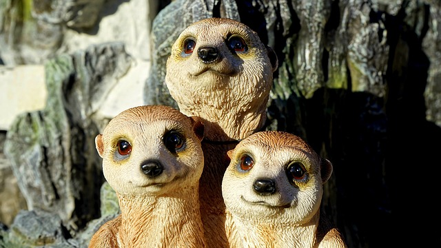 Meerkat, Family, Animal, Cute, Desert, Small, Eyes