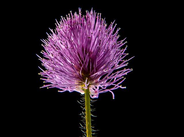 Small Flower, Flower, Macro
