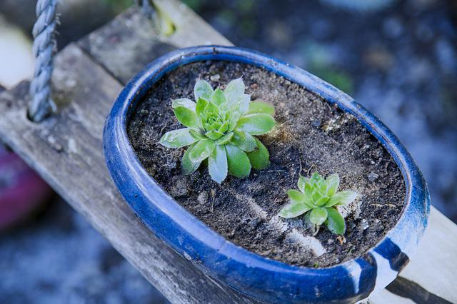 Potted Plants, Small Fresh, Japan Wind, Plant