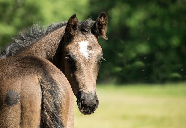 Horse, Brown, Rape, Foal, Young, Sweet, Small, Meadow