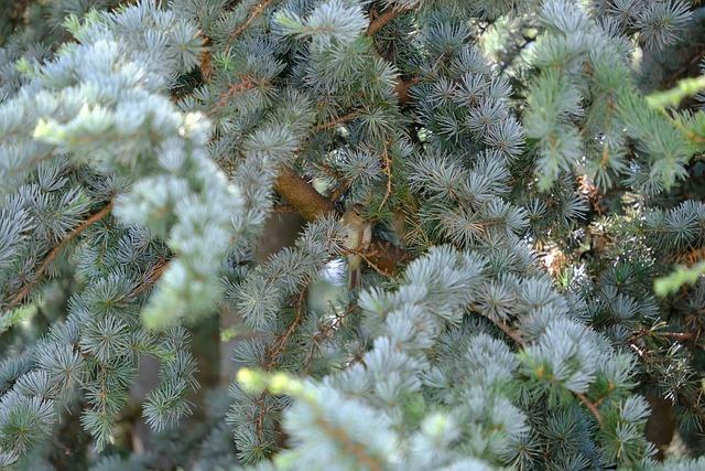 Bird, Hidden, Small, Willow Warbler, Chiffchaff