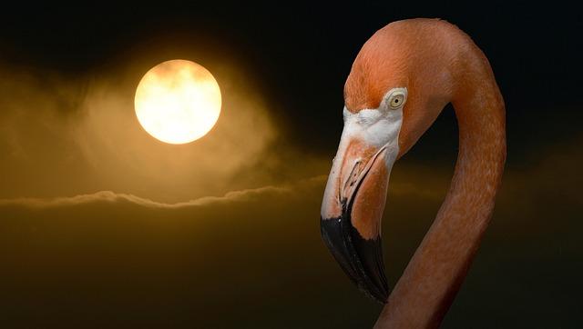 Flamingo, Summer, Sun, Heiss, Smog, Alarm, Threat