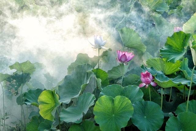Lotus, Summer, Hasuike, Cool, Smoke