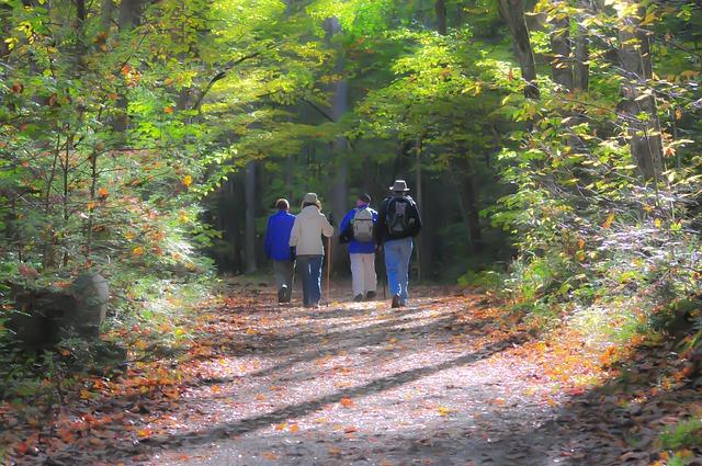 Hiking, Trail, Smoky Mountains, Mountain Trail, Hikers