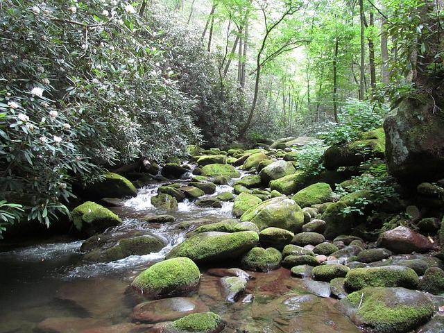 Smoky, Mountains, Park, Nature, Green, Forest, Trees