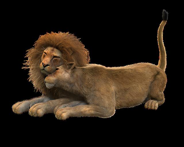 Lion, Lions Couple, Smooch, Cat, Mane, Carnivores