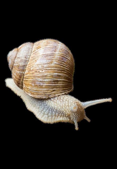 Snail, Shell, Slowly, Crawl, Animal, Mucus, Land Snail
