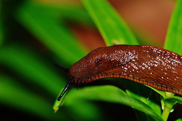 Snail, Slug, Garden, Pest, Nature, Animal, Brown