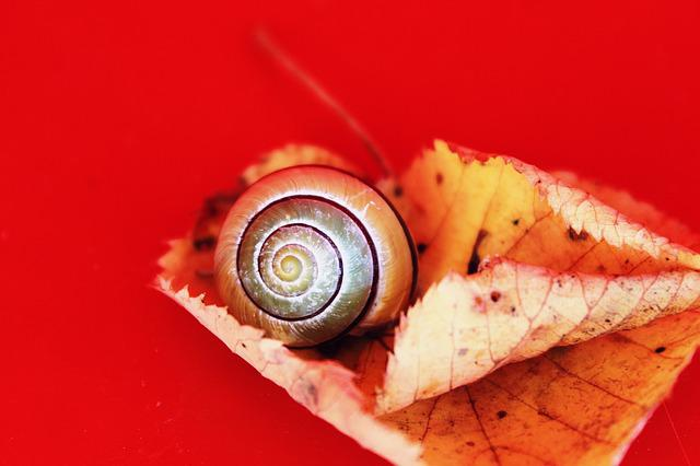 Snail, Autumn, Leaves, Fall Leaves, Nature, Shell